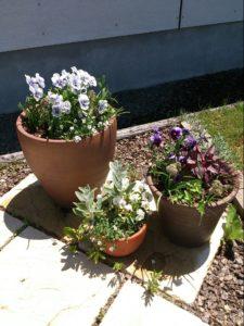 単純鉢植え