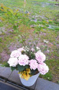 紫陽花とブルーベリー