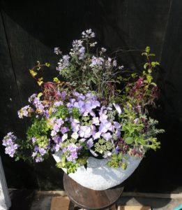 紫陽花、八重バコバ、ペチュニア、キンギョソウギャザリングお客様-フルーレfleur-é