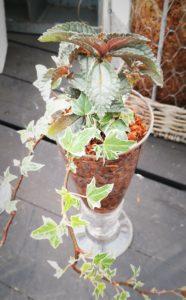 観葉植物ガラス-フルーレfleur-é