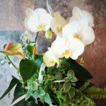 胡蝶蘭寄せ植え-フルーレfleur-é
