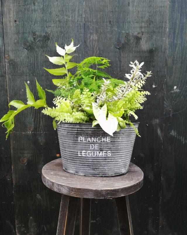 観葉植物ブリキ-フルーレfleur-é