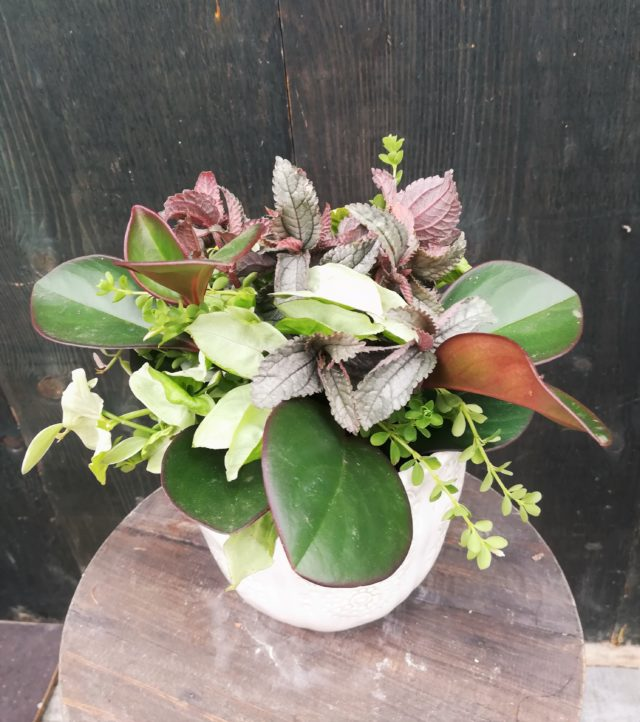 観葉植物-フルーレfleur-é