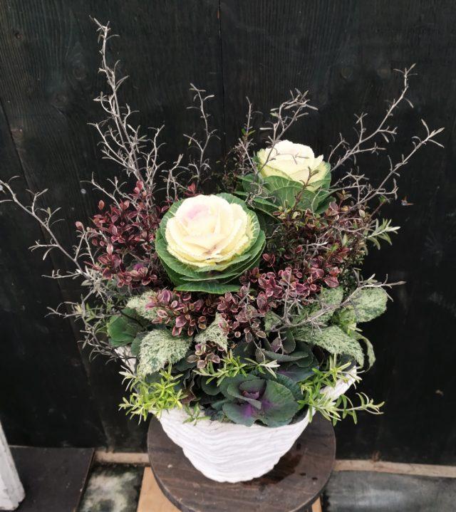 葉牡丹ギャザリング寄せ植え-フルーレfleur-é