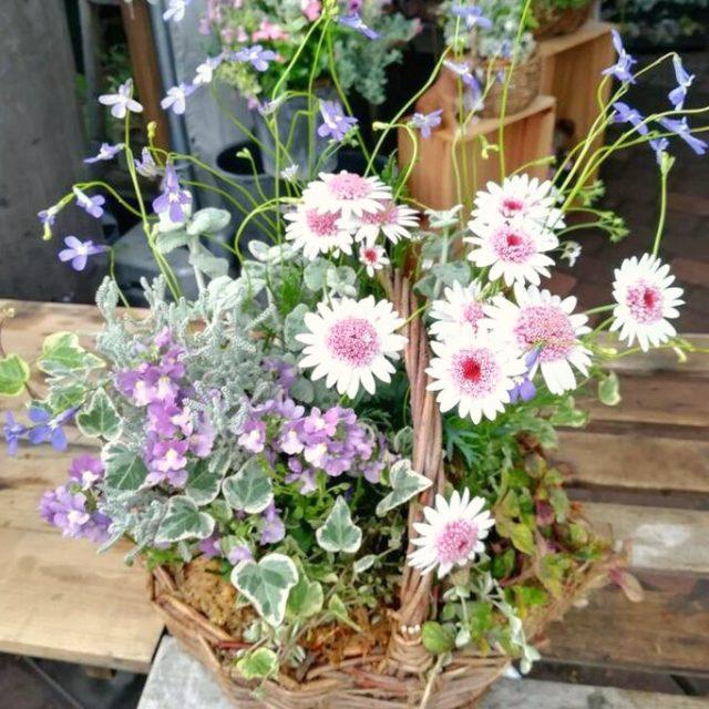 札幌花フェスタ‐フルーレ