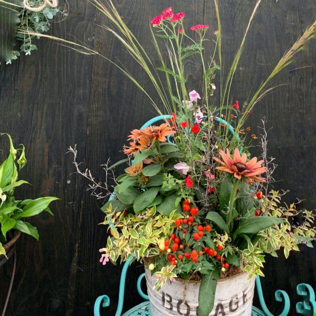 秋寄せ植え‐fleur-e.com