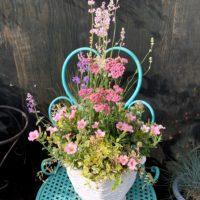 春寄せ植え‐fleur-e.com