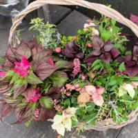 花の寄せ植え -fleur-e.com
