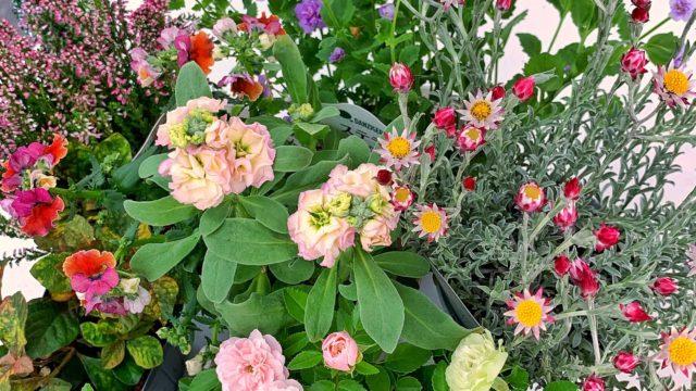 秋の寄せ植え花材-フルーレfleur-é