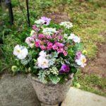 玄関鉢植え-フルーレfleur-é
