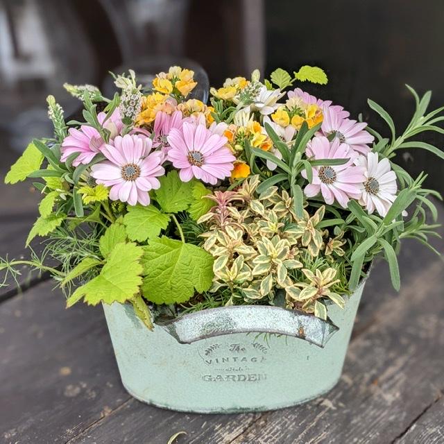 春の寄せ植え花材-フルーレfleur-é